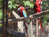 Corrientes Loro Park 95
