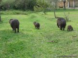 Viaje a los Esteros del Ibera 2010 60