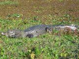 Viaje a los Esteros del Ibera 2010 86