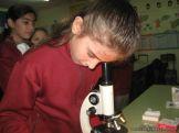 Utilizando el Microscopio 4