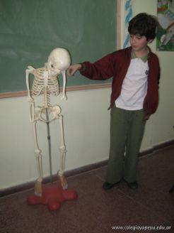 Sistema Osteoartromuscular 29