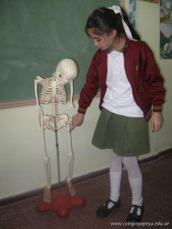 Sistema Osteoartromuscular 30