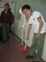 Sistema Osteoartromuscular 35