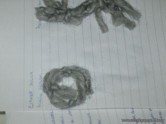 Diferentes Biomoleculas 21
