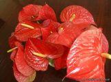 Flores Mori 2