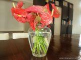 Flores Mori 3