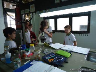 Observacion en Microscopio 20