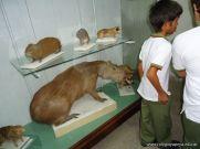 Visita al Museo de Ciencias Naturales 43