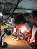 Observando por el Microscopio 3