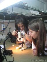 Observando por el Microscopio 7