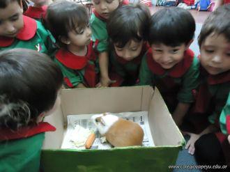 Preparativos y Festejos por el Dia del Animal 111