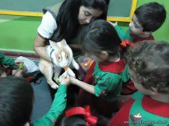 Preparativos y Festejos por el Dia del Animal 77