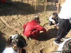1er grado Trabajando en la Huerta 11