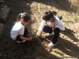1er grado Trabajando en la Huerta 8