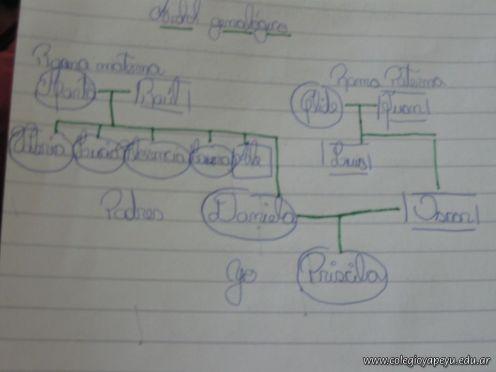 Arbol Genealogico 12