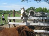 Visita a la Granja La Ilusion 2011 178