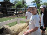 Visita a la Granja La Ilusion 2011 183