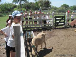 Visita a la Granja La Ilusion 2011 186