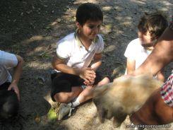Visita a la Granja La Ilusion 2011 341