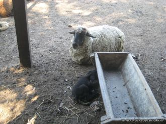 Visita a la Granja La Ilusion 2011 353