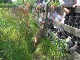 Visita a la Granja La Ilusion 2011 360