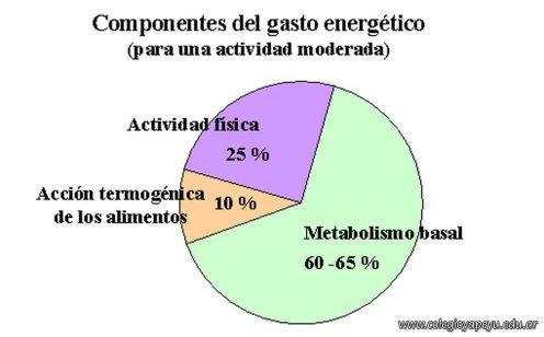 Habitos Alimentarios Saludables 12
