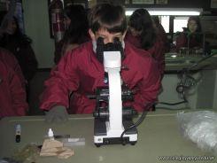 Observando Celulas 10