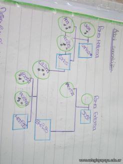 Arbol Genealogico 41