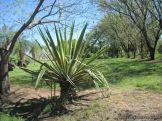 Visita al Jardin Botanico 52