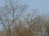 En busca de Aves 5
