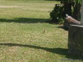 En busca de Aves 6