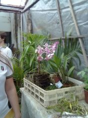 Visitamos la Catedra de Fisiologia Vegetal 11