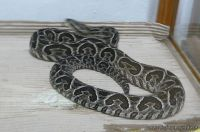 Visita al Serpentario 6