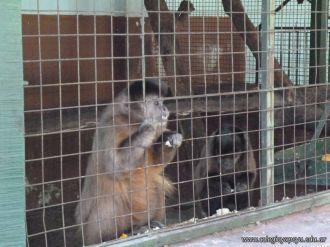Visita al Zoologico de Salas de 3 34