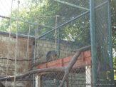 Visita al Zoologico de Salas de 3 46