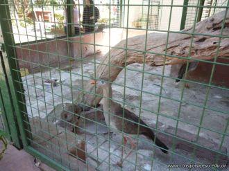 Visita al Zoologico de Salas de 3 49