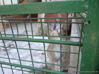 Visita al Zoologico de Salas de 3 50