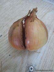 Reproduccion asexual de vegetales 33