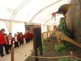 Dinosaurios en Salas de 5 18