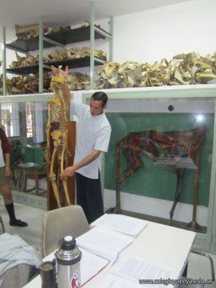 Visitamos la Facultad de Veterinaria 26
