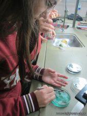 Cultivo de Microorganismos 11