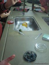 Cultivo de Microorganismos 14