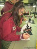 Cultivo de Microorganismos 18