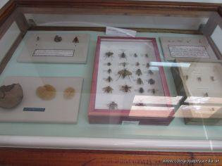 Visita al Museo de Ciencias Naturales Amado Bompland 12