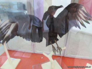 Visita al Museo de Ciencias Naturales 20