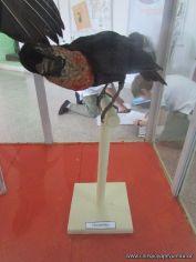 Visita al Museo de Ciencias Naturales 21