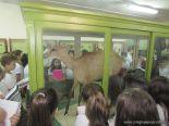 Visita al Museo de Ciencias Naturales 78