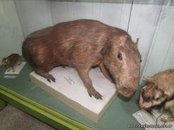 Visita al Museo de Ciencias Naturales 92