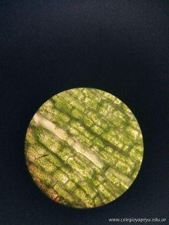 Observacion de Celulas 10