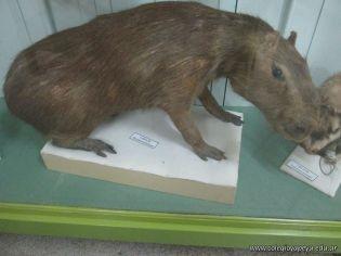 Visita al Museo de Ciencias Naturales 13